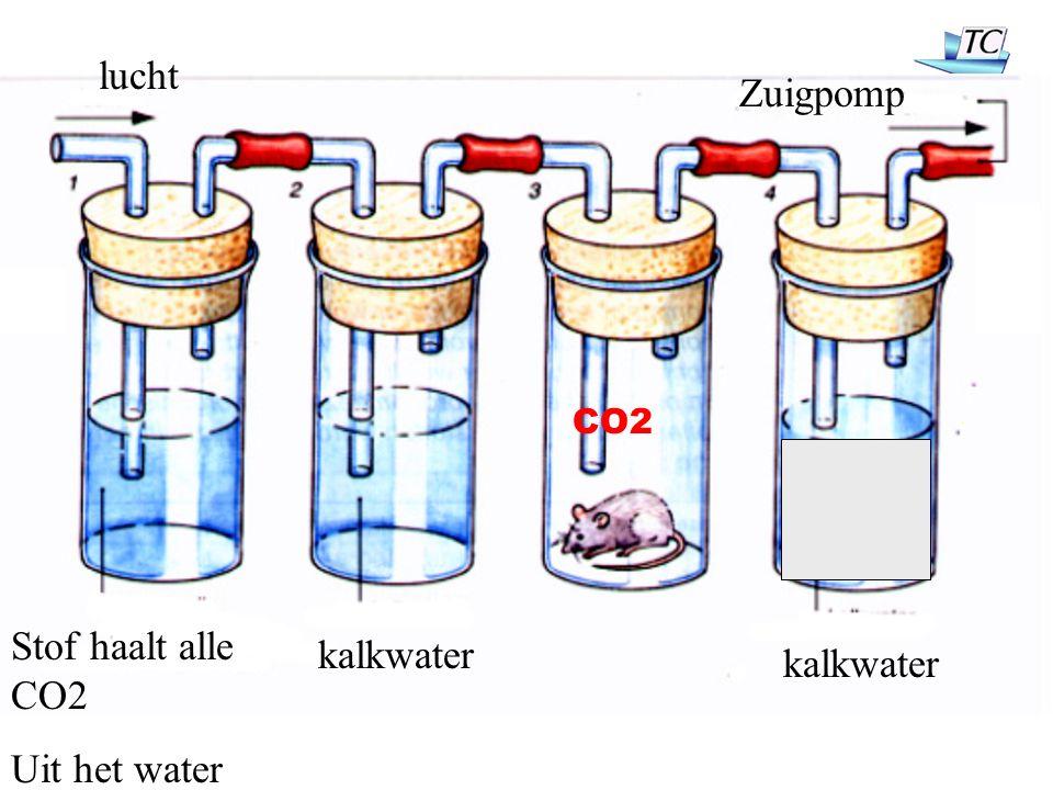 Stof haalt alle CO2 Uit het water kalkwater lucht Zuigpomp CO2