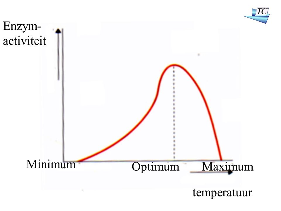 Minimum OptimumMaximum Enzym- activiteit temperatuur