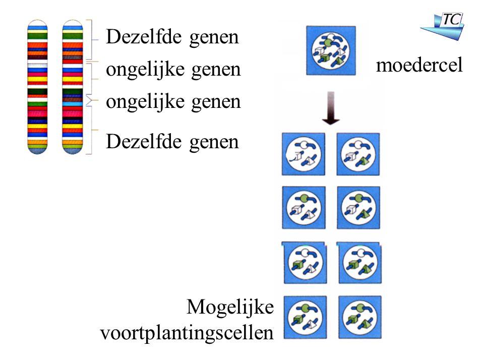 moedercel Dezelfde genen ongelijke genen Mogelijke voortplantingscellen