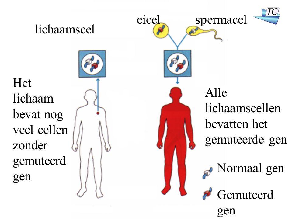 lichaamscel Het lichaam bevat nog veel cellen zonder gemuteerd gen Alle lichaamscellen bevatten het gemuteerde gen eicelspermacel Normaal gen Gemuteerd gen