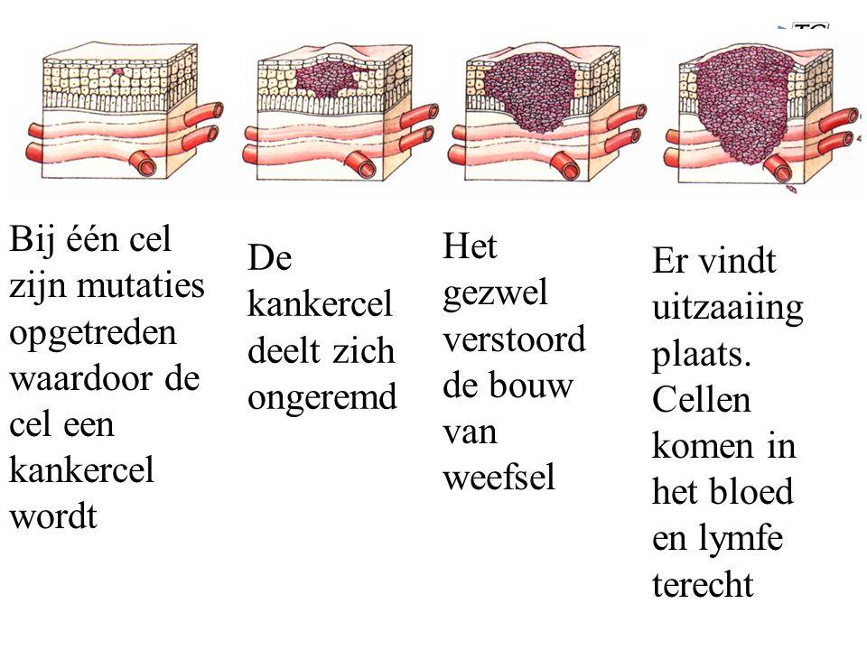 Bij één cel zijn mutaties opgetreden waardoor de cel een kankercel wordt De kankercel deelt zich ongeremd Het gezwel verstoord de bouw van weefsel Er vindt uitzaaiing plaats.