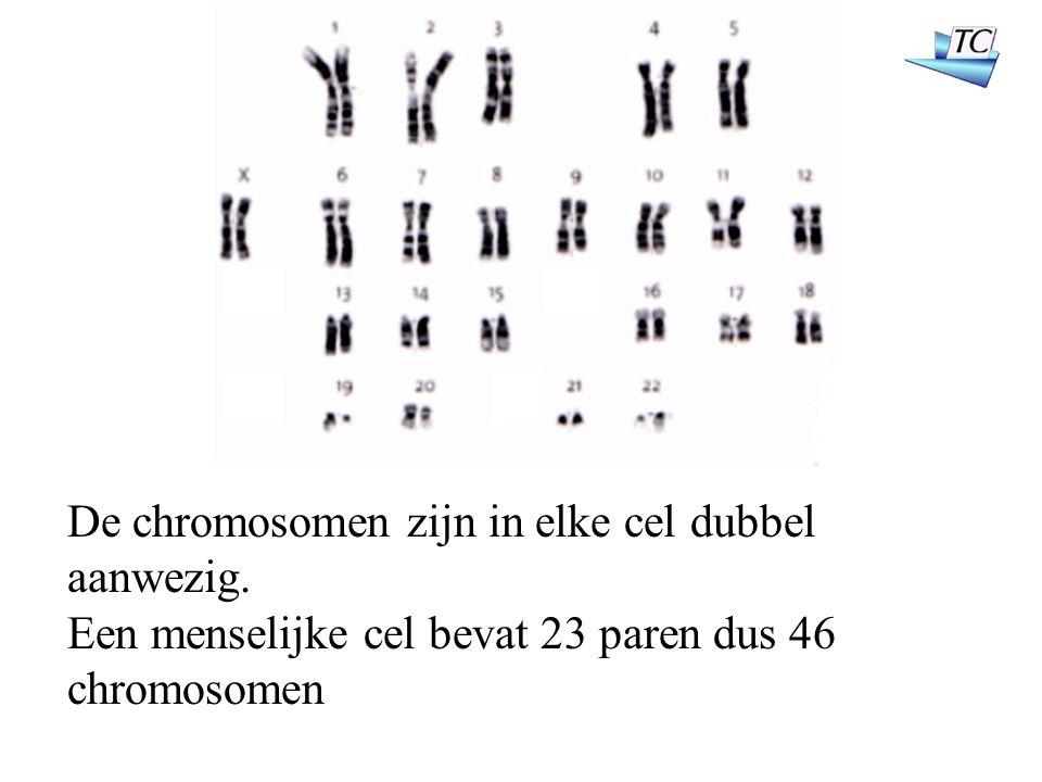 De chromosomen zijn in elke cel dubbel aanwezig. Een menselijke cel bevat 23 paren dus 46 chromosomen