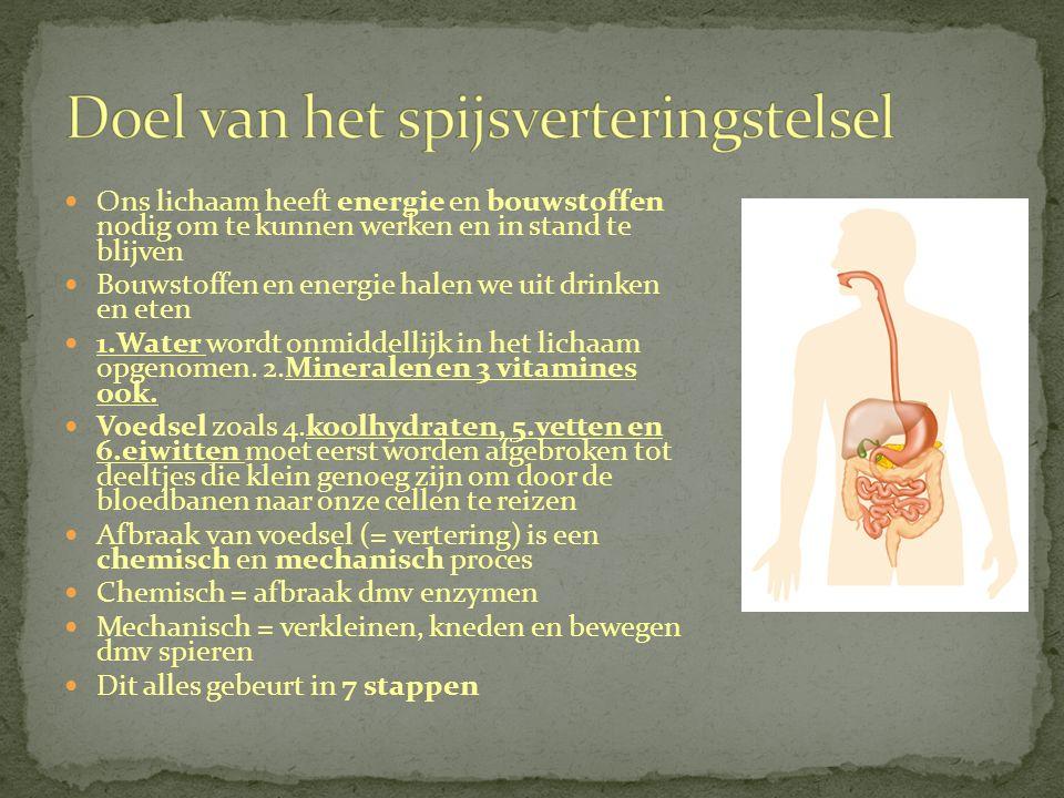 Bijzonderheden van de dikke darm Twee sluitspieren bij de anus.
