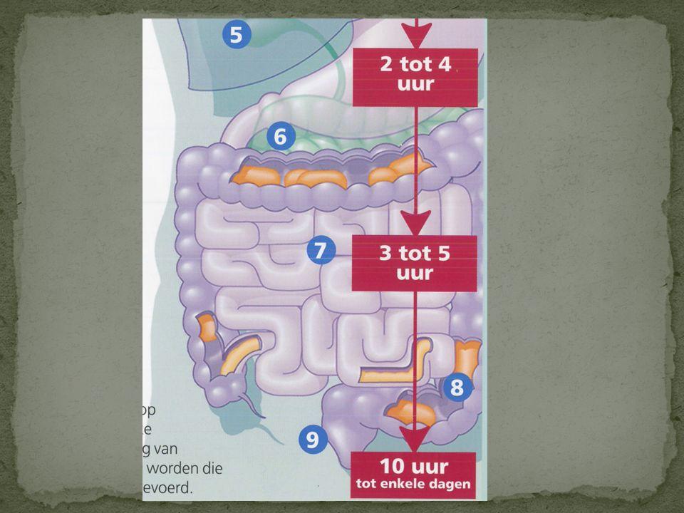 De endeldarm Mechanische functie: Tijdelijke opslag van onverteerbare voedselresten (ontlasting) 12 cm lang Heeft geen chemische spijsverteringsfuncti