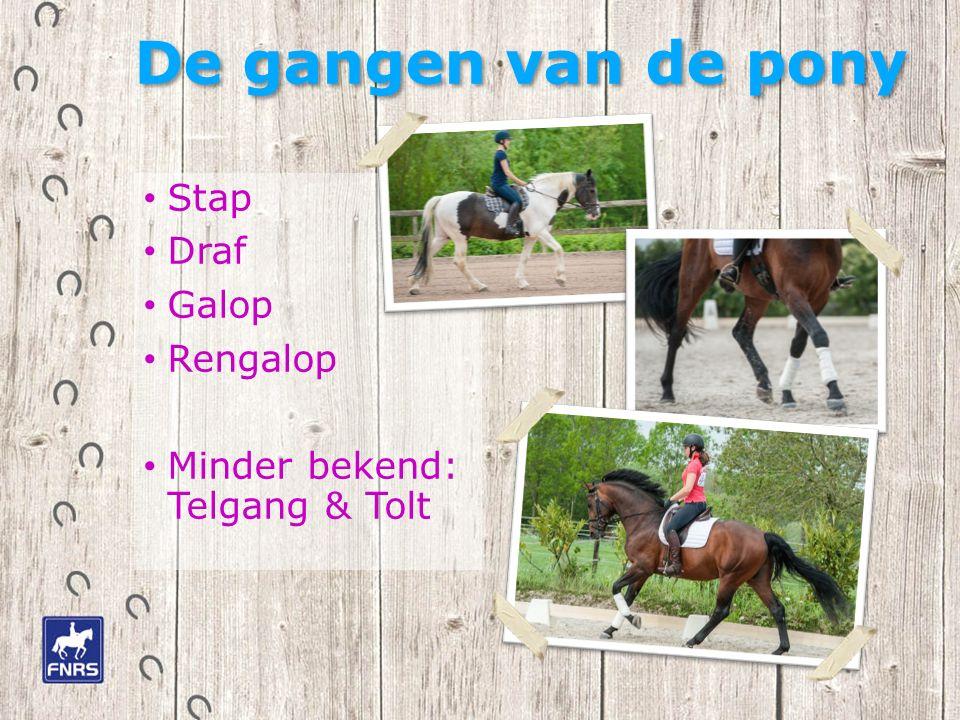 De gangen van de pony Stap Draf Galop Rengalop Minder bekend: Telgang & Tolt