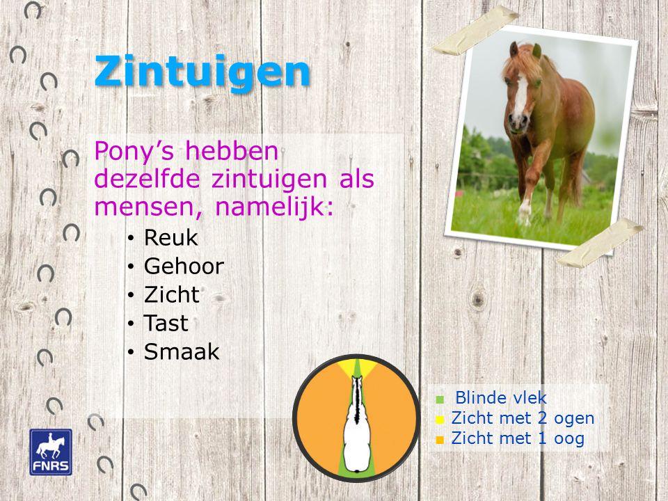 Zintuigen Pony's hebben dezelfde zintuigen als mensen, namelijk: Reuk Gehoor Zicht Tast Smaak ■ Blinde vlek ■ Zicht met 2 ogen ■ Zicht met 1 oog