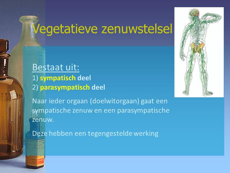 Vegetatieve zenuwstelsel Bestaat uit: 1) sympatisch deel 2) parasympatisch deel Naar ieder orgaan (doelwitorgaan) gaat een sympatische zenuw en een parasympatische zenuw.