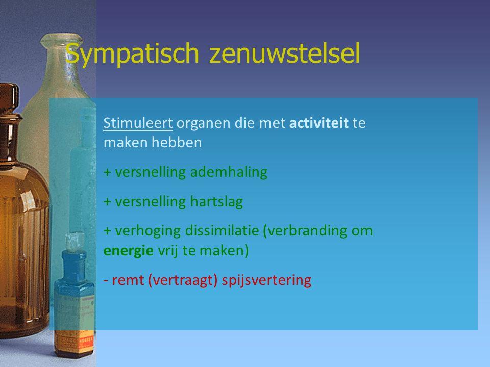 Stimuleert organen die met activiteit te maken hebben + versnelling ademhaling + versnelling hartslag + verhoging dissimilatie (verbranding om energie vrij te maken) - remt (vertraagt) spijsvertering Sympatisch zenuwstelsel
