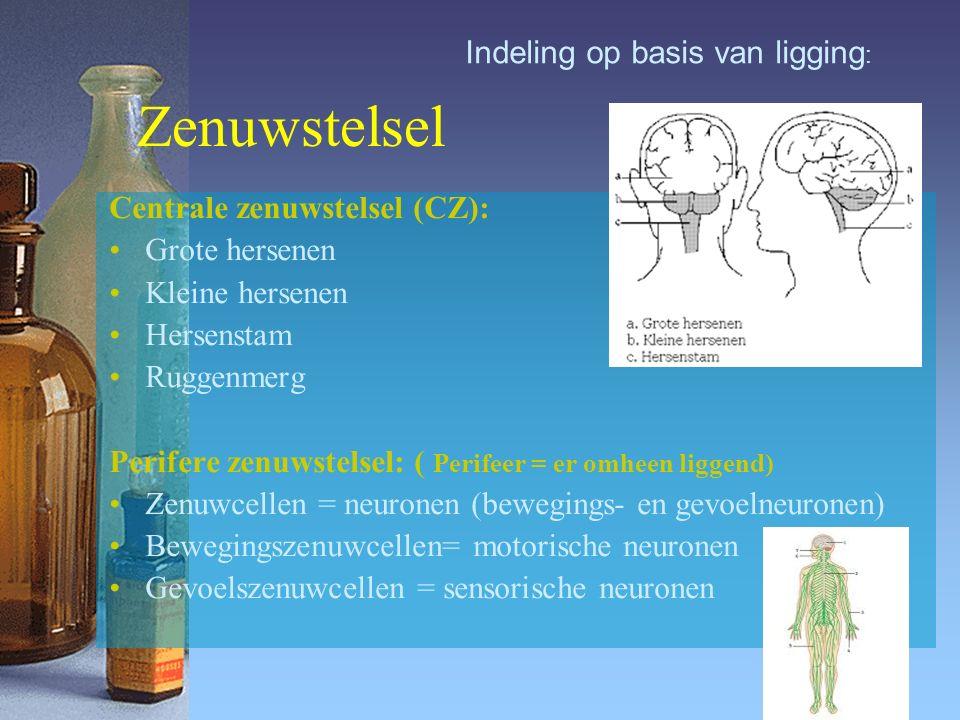 Zenuwstelsel Centrale zenuwstelsel (CZ): Grote hersenen Kleine hersenen Hersenstam Ruggenmerg Perifere zenuwstelsel: ( Perifeer = er omheen liggend) Zenuwcellen = neuronen (bewegings- en gevoelneuronen) Bewegingszenuwcellen= motorische neuronen Gevoelszenuwcellen = sensorische neuronen Indeling op basis van ligging :
