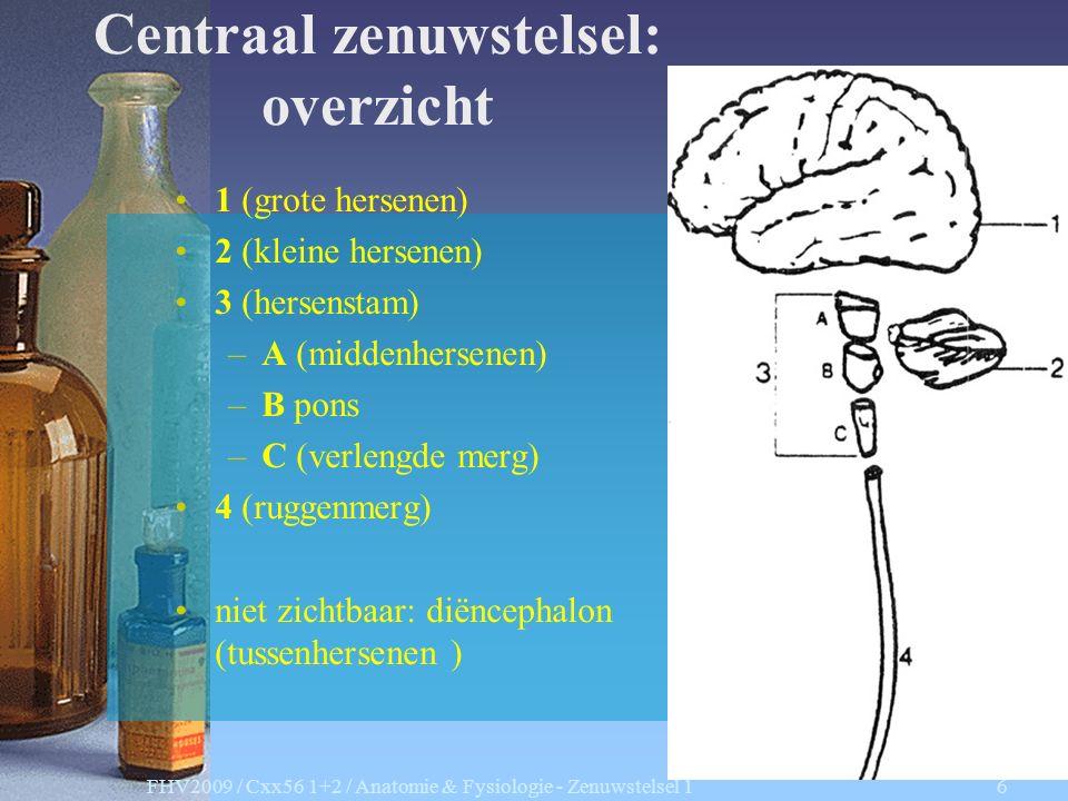 FHV2009 / Cxx56 1+2 / Anatomie & Fysiologie - Zenuwstelsel 1 6 Centraal zenuwstelsel: overzicht 1 (grote hersenen) 2 (kleine hersenen) 3 (hersenstam) –A (middenhersenen) –B pons –C (verlengde merg) 4 (ruggenmerg) niet zichtbaar: diëncephalon (tussenhersenen )