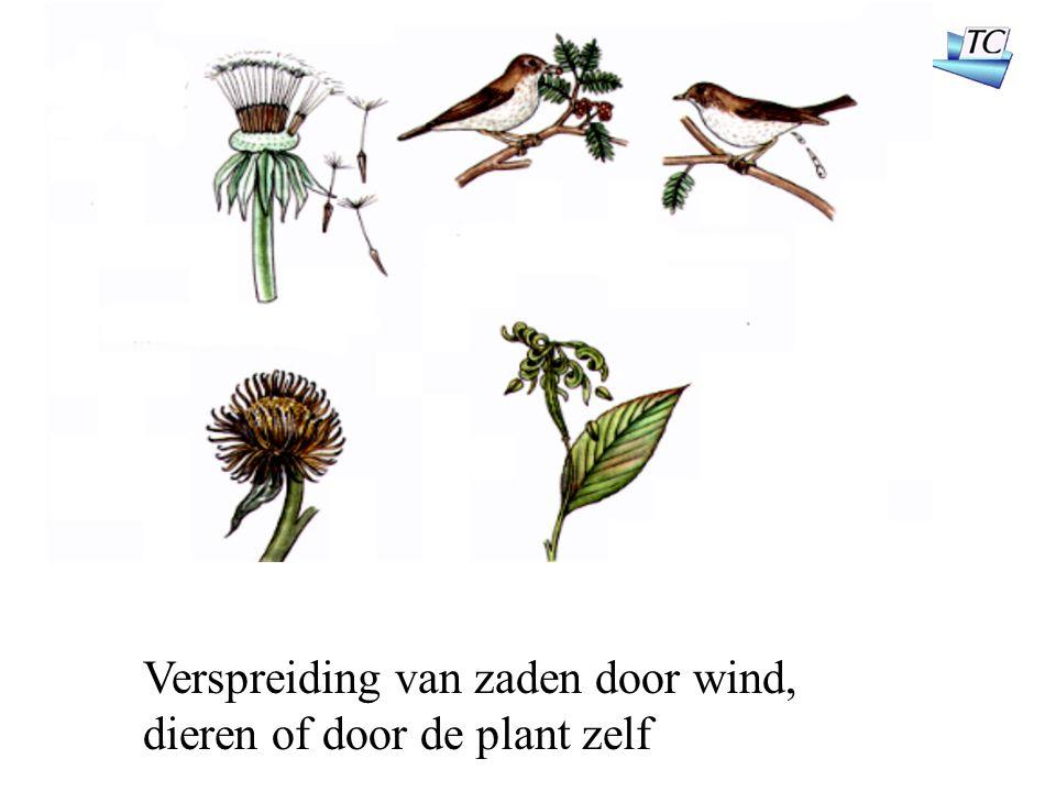 Verspreiding van zaden door wind, dieren of door de plant zelf