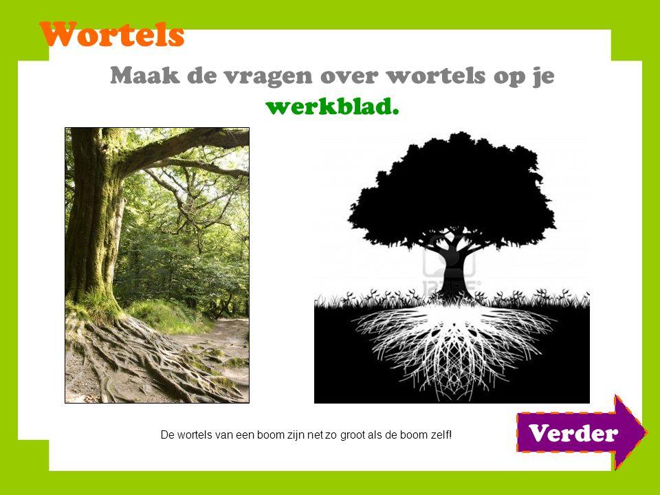 Wortels Maak de vragen over wortels op je werkblad. De wortels van een boom zijn net zo groot als de boom zelf! Verder