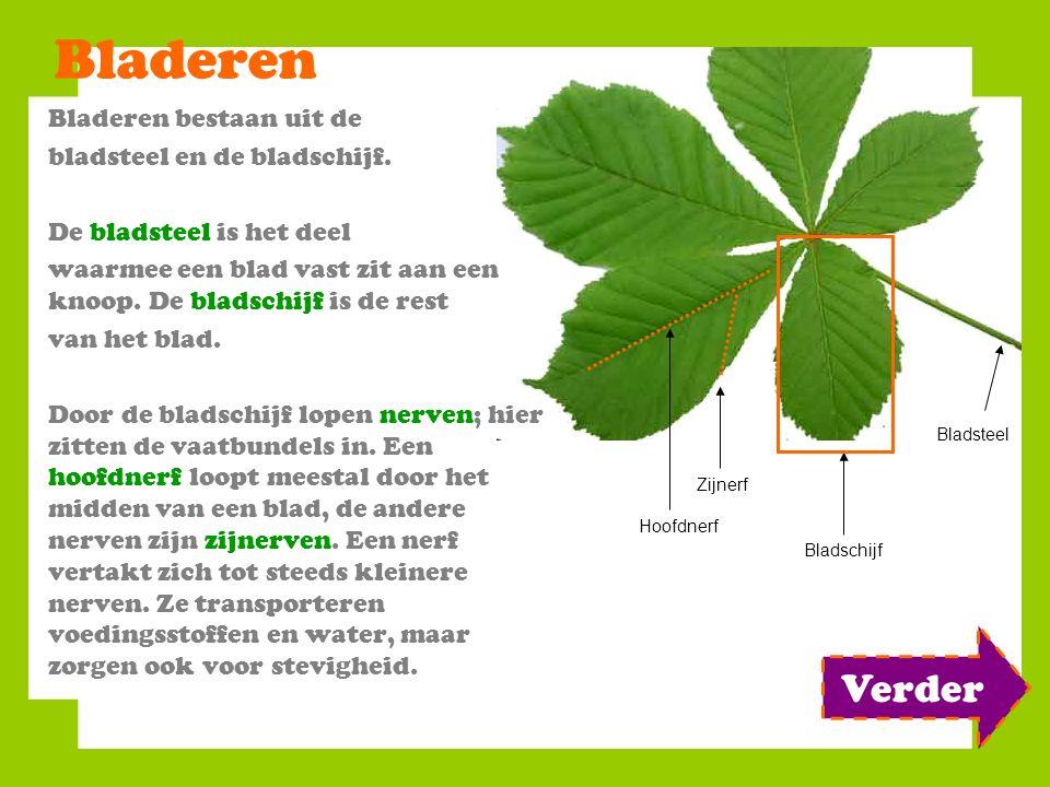 Bladeren Bladeren bestaan uit de bladsteel en de bladschijf. De bladsteel is het deel waarmee een blad vast zit aan een knoop. De bladschijf is de res