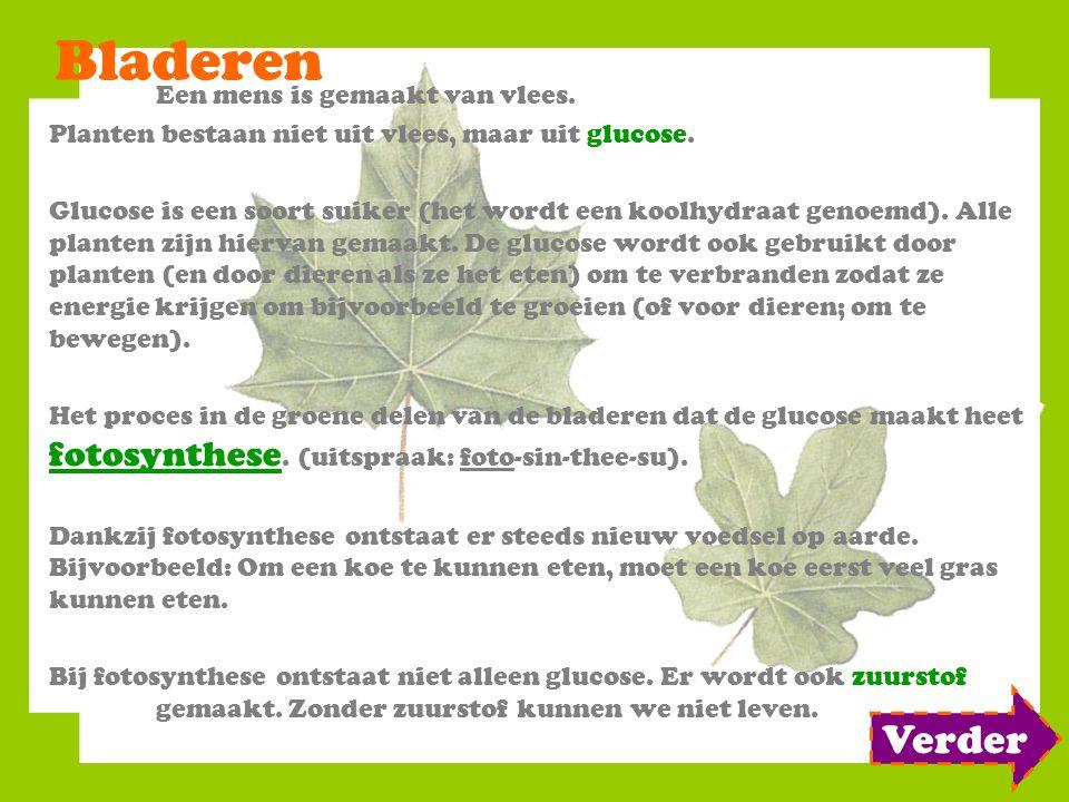 Bladeren Een mens is gemaakt van vlees. Planten bestaan niet uit vlees, maar uit glucose. Glucose is een soort suiker (het wordt een koolhydraat genoe
