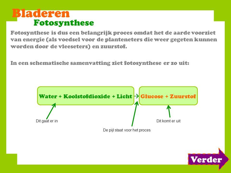 Bladeren Fotosynthese Fotosynthese is dus een belangrijk proces omdat het de aarde voorziet van energie (als voedsel voor de planteneters die weer geg