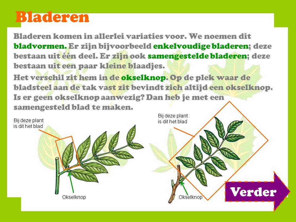 Bladeren Bladeren komen in allerlei variaties voor. We noemen dit bladvormen. Er zijn bijvoorbeeld enkelvoudige bladeren; deze bestaan uit één deel. E