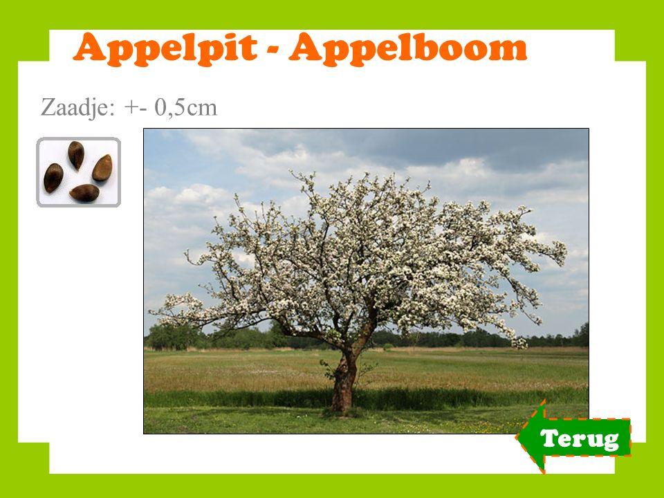 Appelpit - Appelboom Zaadje: +- 0,5cm Terug