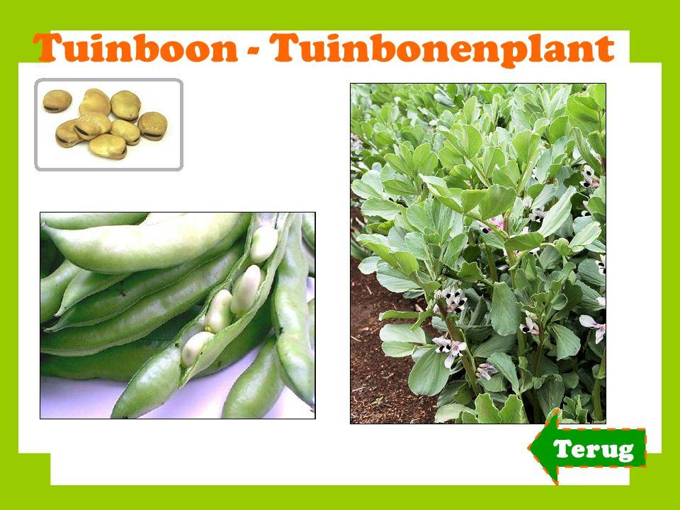 Tuinboon - Tuinbonenplant Terug