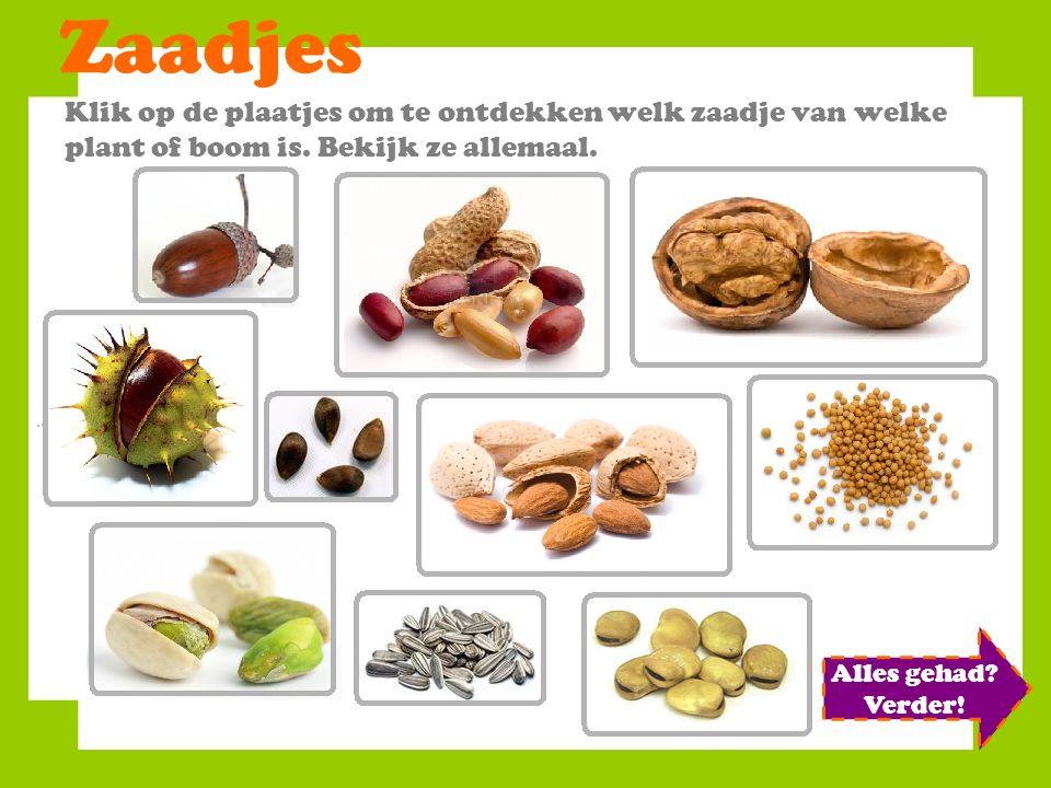 Zaadjes Klik op de plaatjes om te ontdekken welk zaadje van welke plant of boom is.