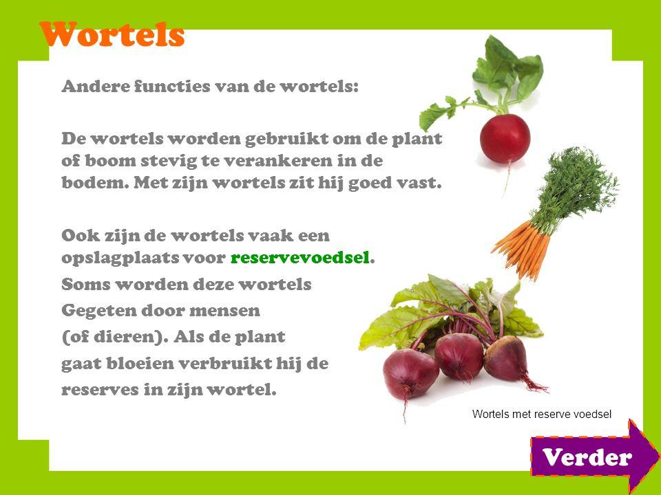 Wortels Andere functies van de wortels: De wortels worden gebruikt om de plant of boom stevig te verankeren in de bodem. Met zijn wortels zit hij goed