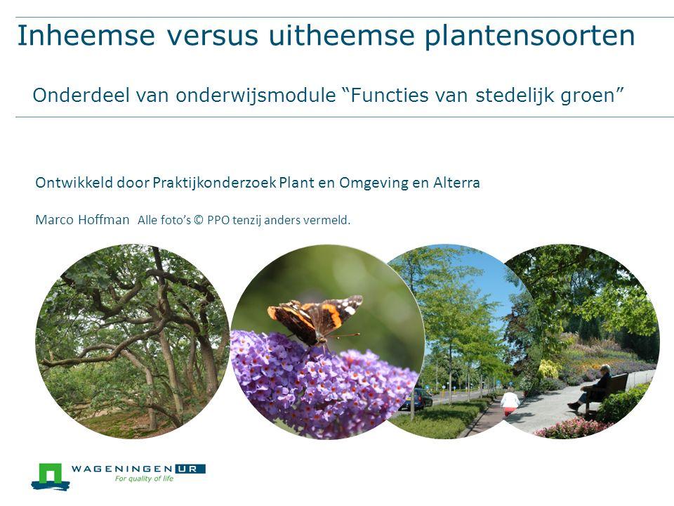 Aanplant van uitsluitend inheemse soorten in de stedelijke omgeving is een goede zaak Het is prima dat in NL bossen met Amerikaanse eiken worden gekapt en vervangen door inheemse zomereiken.