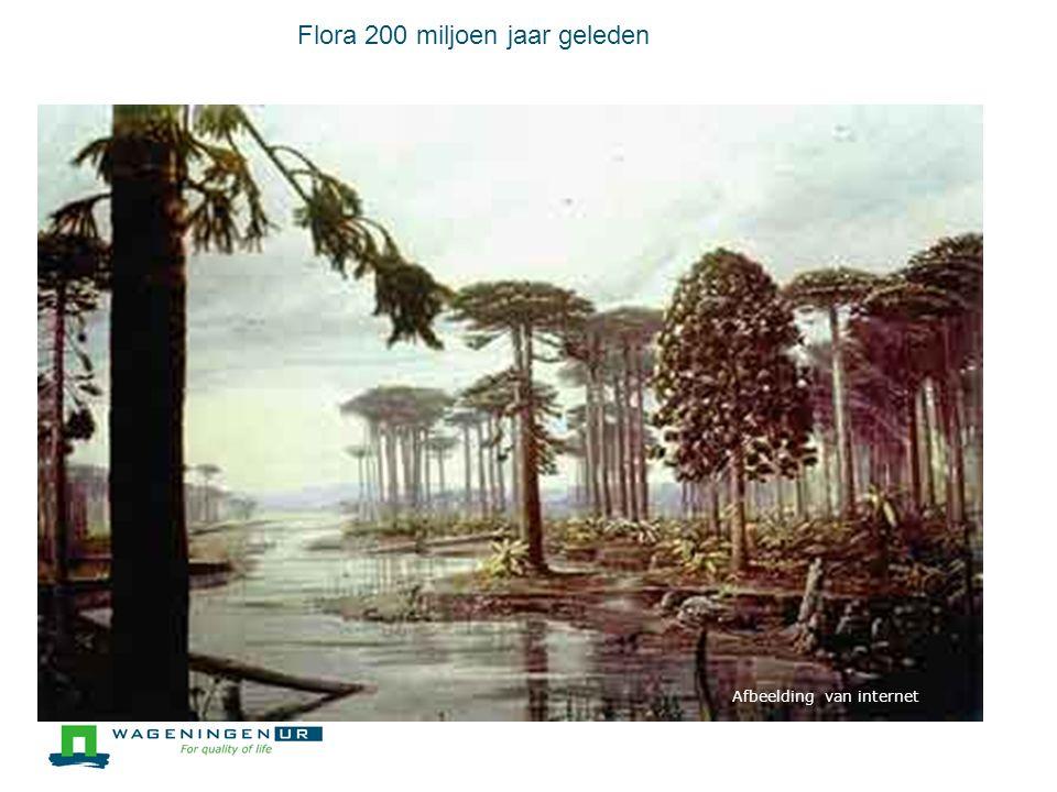 Flora 200 miljoen jaar geleden 5 Foto's van internet Afbeelding van internet