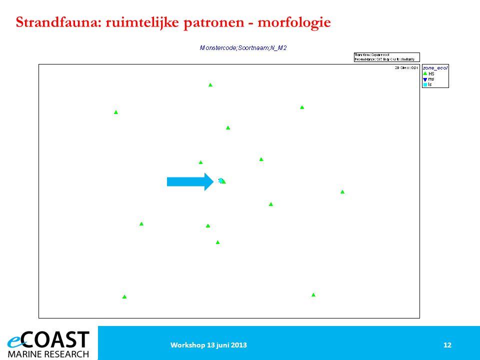 Strandfauna: ruimtelijke patronen - morfologie 12Workshop 13 juni 2013