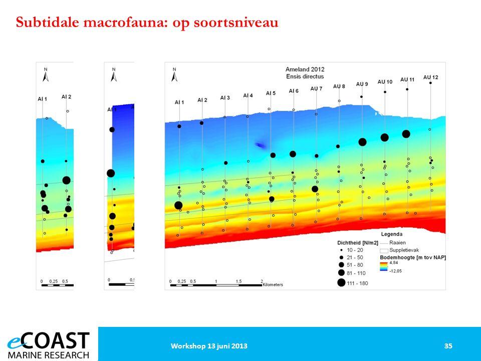 35Workshop 13 juni 2013 Subtidale macrofauna: op soortsniveau
