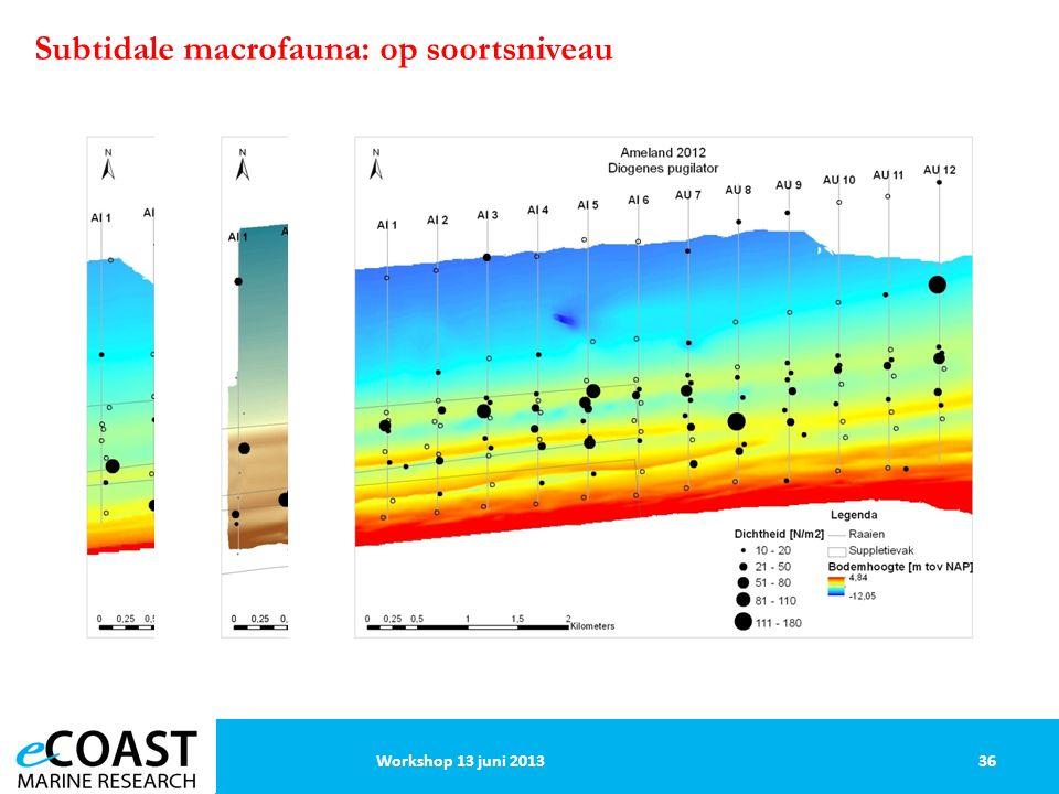 36Workshop 13 juni 2013 Subtidale macrofauna: op soortsniveau