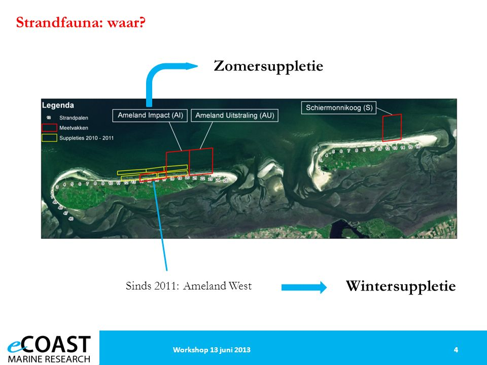 Strandfauna: waar 4Workshop 13 juni 2013 Sinds 2011: Ameland West Zomersuppletie Wintersuppletie