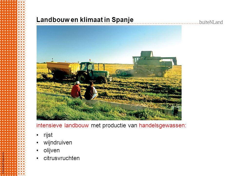 Landbouw en klimaat in Spanje intensieve landbouw met productie van handelsgewassen: rijst wijndruiven olijven citrusvruchten