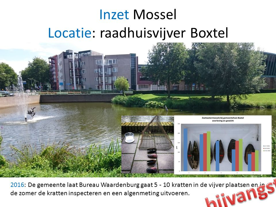 Inzet Mossel Locatie: raadhuisvijver Boxtel 2016: De gemeente laat Bureau Waardenburg gaat 5 - 10 kratten in de vijver plaatsen en in de zomer de kratten inspecteren en een algenmeting uitvoeren.