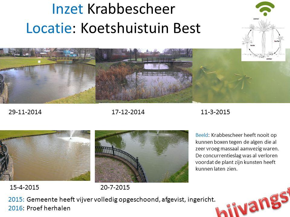 Inzet Krabbescheer Locatie: Koetshuistuin Best 29-11-2014 11-3-201517-12-2014 15-4-2015 20-7-2015 Beeld: Krabbescheer heeft nooit op kunnen boxen tegen de algen die al zeer vroeg massaal aanwezig waren.
