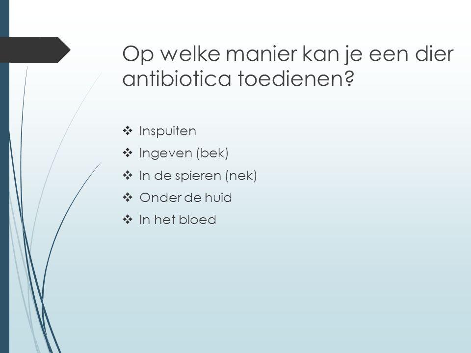 Op welke manier kan je een dier antibiotica toedienen.