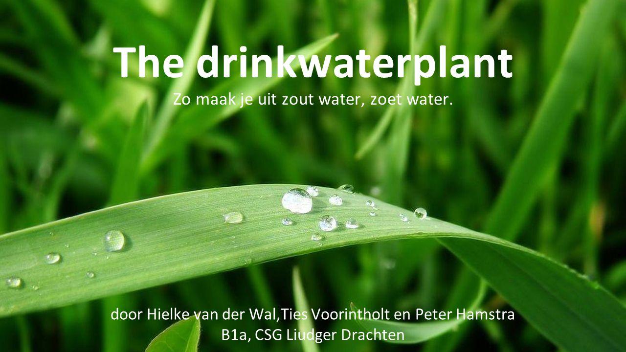 The drinkwaterplant Zo maak je uit zout water, zoet water.