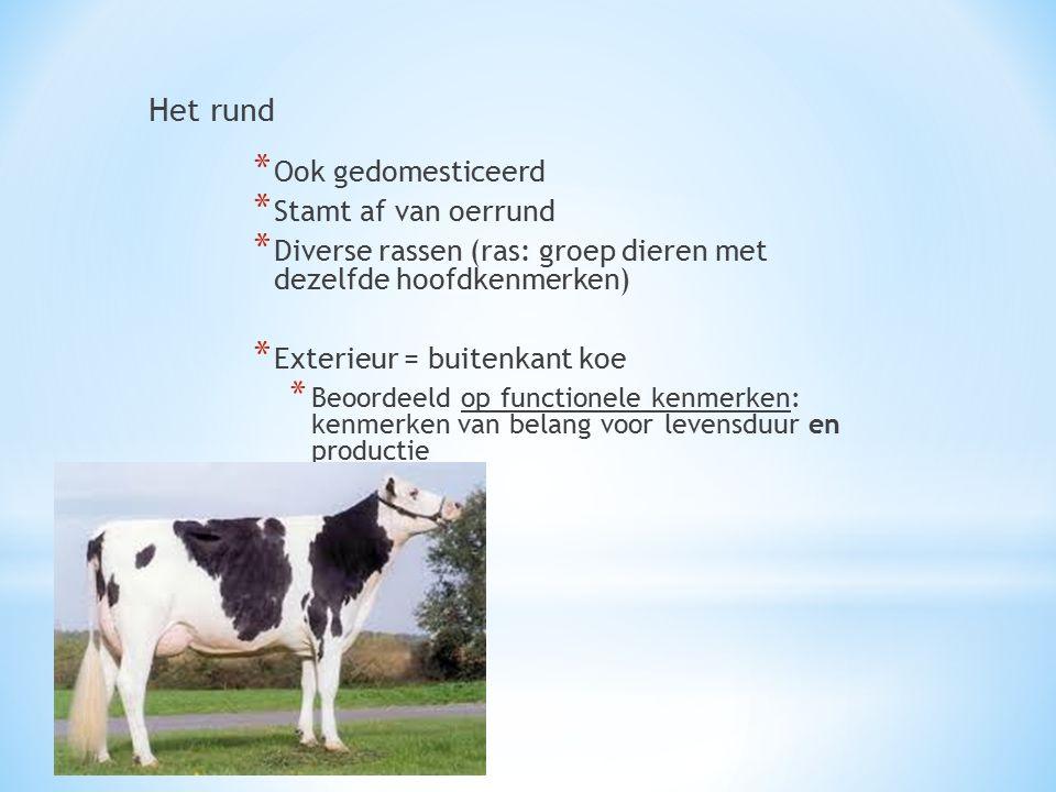 Het rund * Ook gedomesticeerd * Stamt af van oerrund * Diverse rassen (ras: groep dieren met dezelfde hoofdkenmerken) * Exterieur = buitenkant koe * B