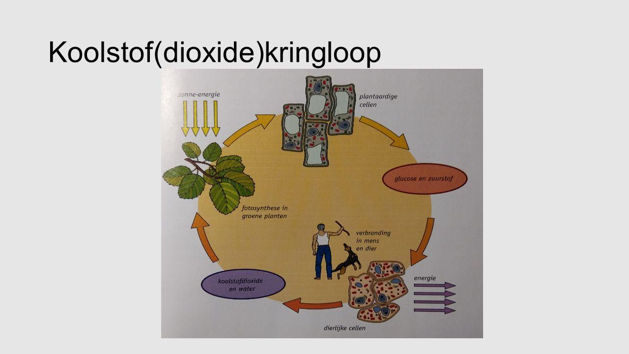 Koolstof(dioxide)kringloop
