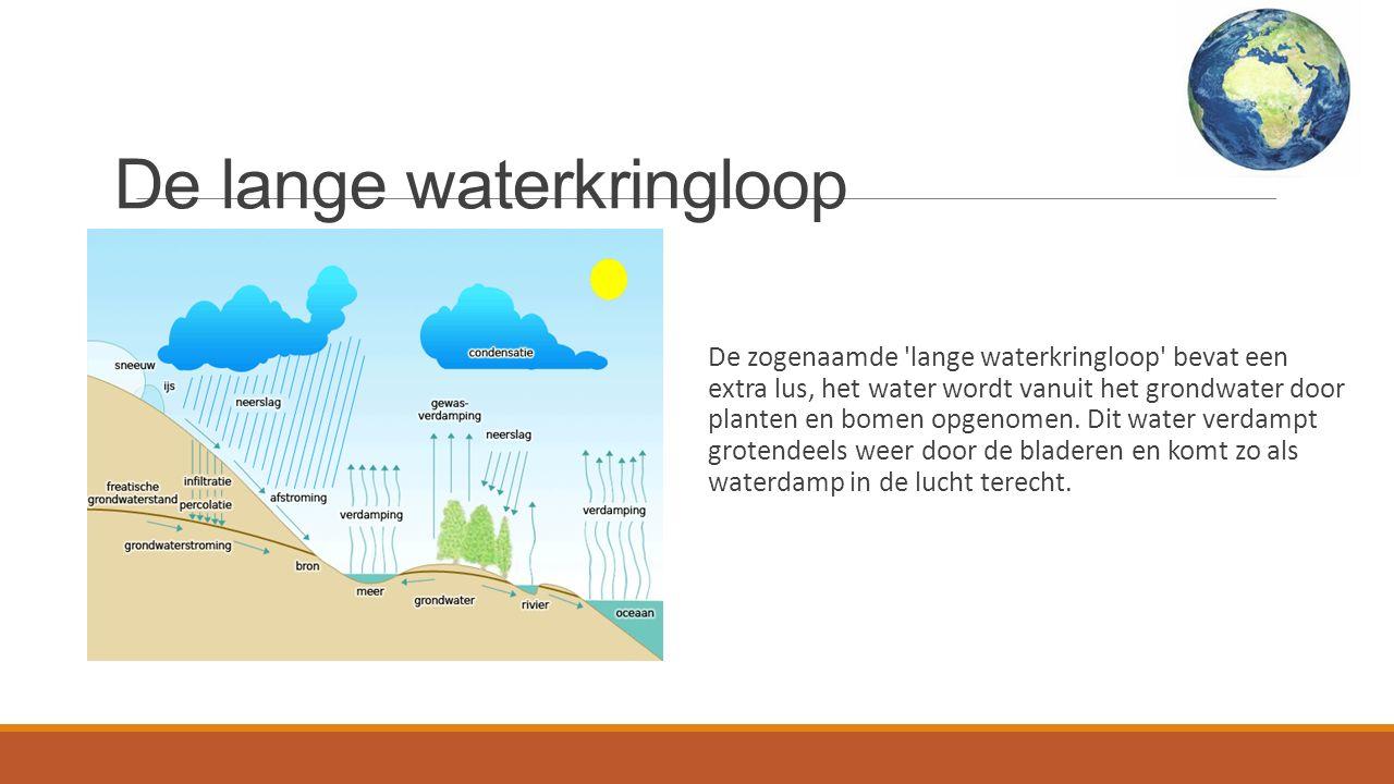 De lange waterkringloop De zogenaamde lange waterkringloop bevat een extra lus, het water wordt vanuit het grondwater door planten en bomen opgenomen.