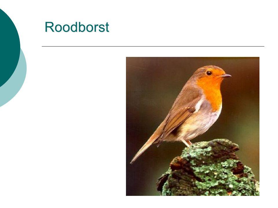 Roodborst