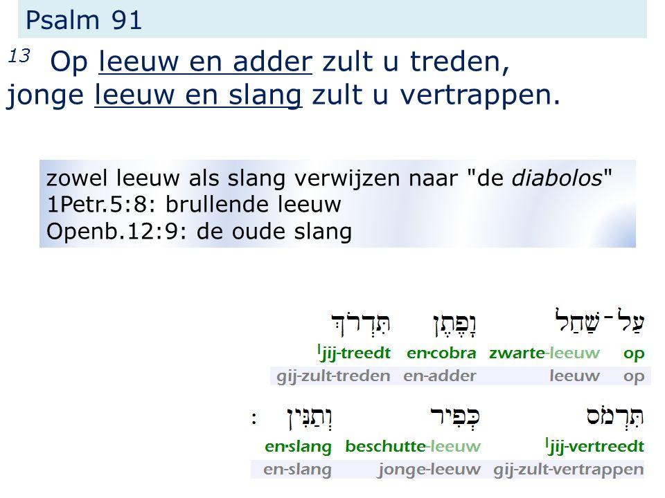 Psalm 91 13 Op leeuw en adder zult u treden, jonge leeuw en slang zult u vertrappen.