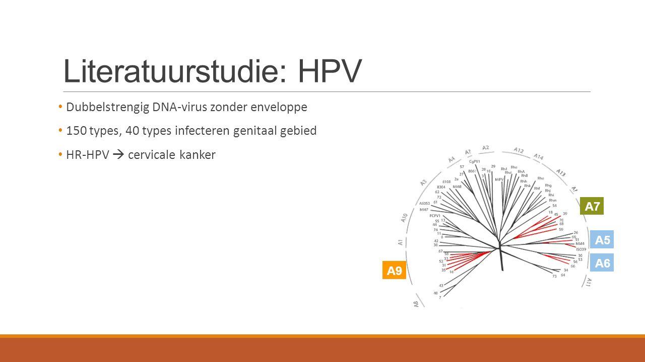 Literatuurstudie: HPV Dubbelstrengig DNA-virus zonder enveloppe 150 types, 40 types infecteren genitaal gebied HR-HPV  cervicale kanker A5 A7 A6 A9