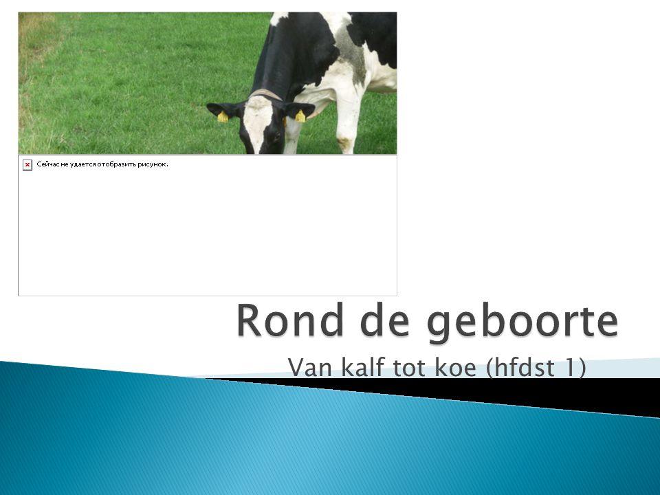 Van kalf tot koe (hfdst 1)