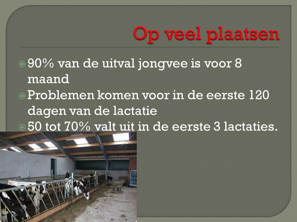  90% van de uitval jongvee is voor 8 maand  Problemen komen voor in de eerste 120 dagen van de lactatie  50 tot 70% valt uit in de eerste 3 lactaties.