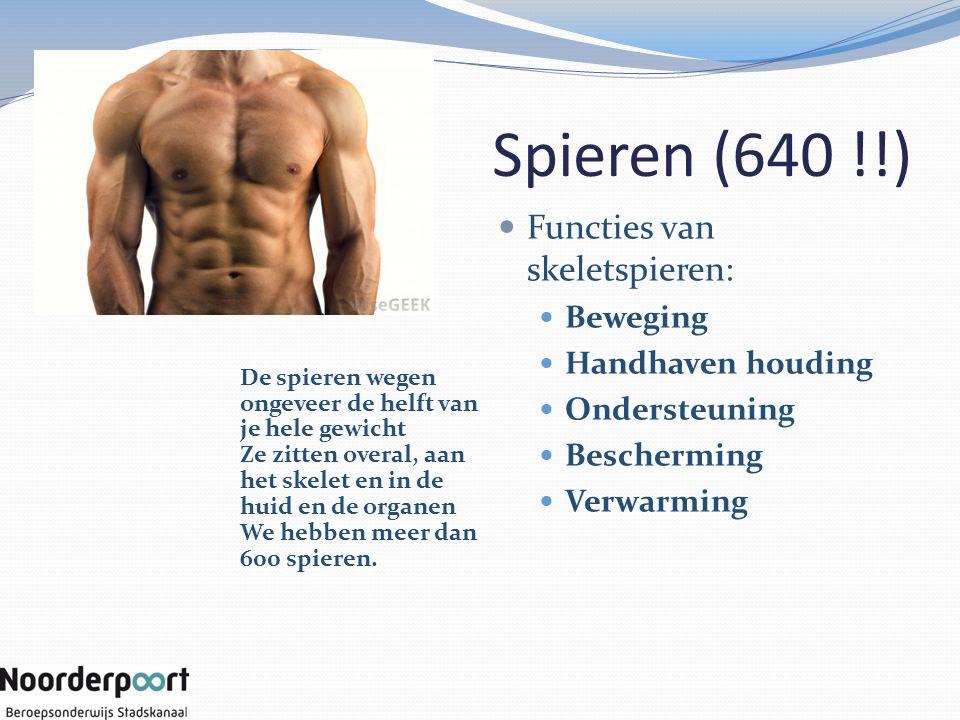 Spieren (640 !!) Functies van skeletspieren: Beweging Handhaven houding Ondersteuning Bescherming Verwarming De spieren wegen ongeveer de helft van je hele gewicht Ze zitten overal, aan het skelet en in de huid en de organen We hebben meer dan 600 spieren.
