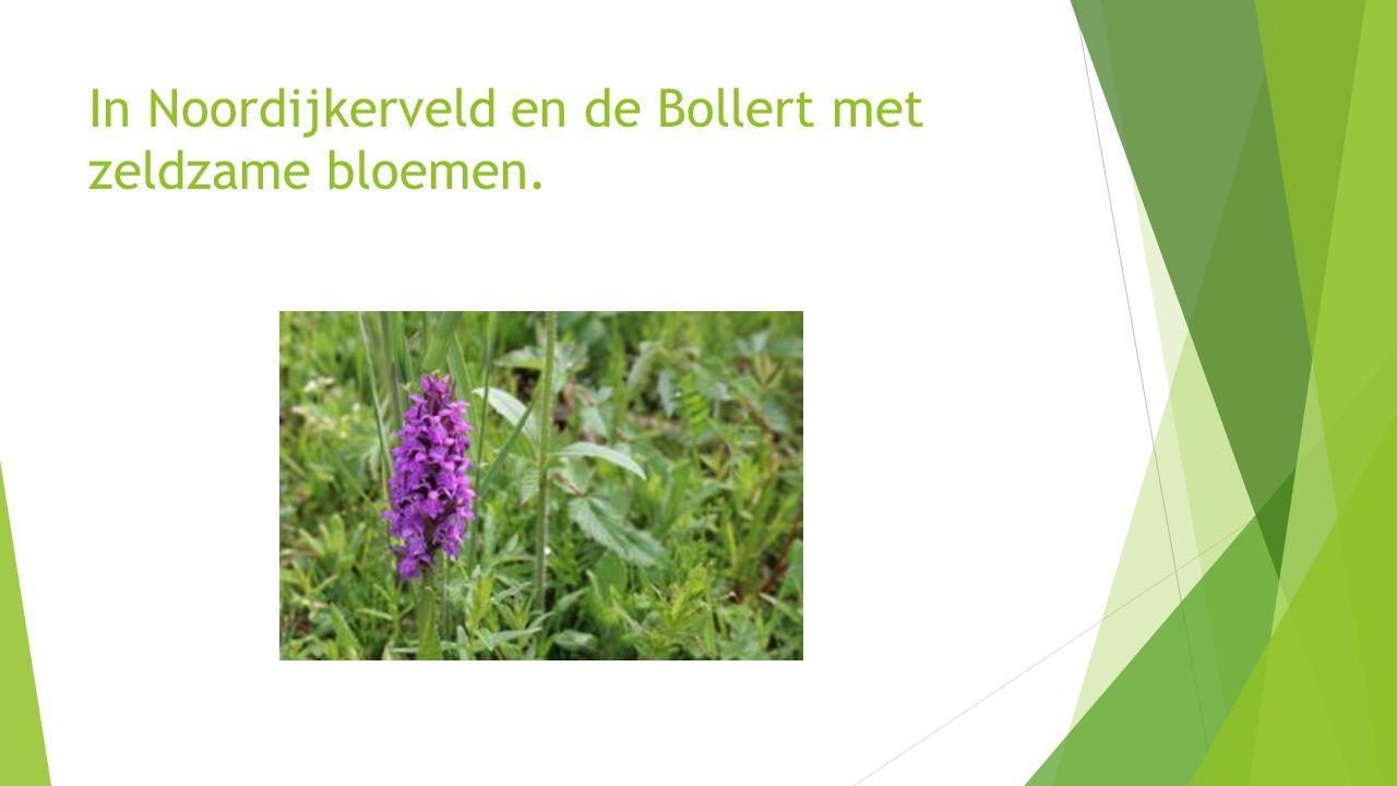 In Noordijkerveld en de Bollert met zeldzame bloemen.