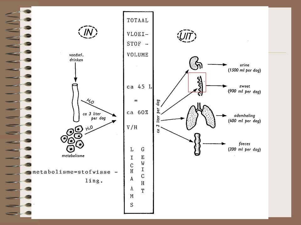 De uitscheiding. Vandaag: de nieren Maar ook via longen, huid en ontlasting