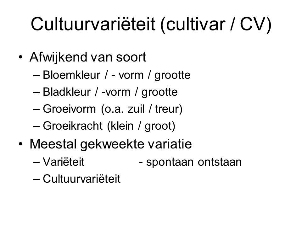 Cultuurvariëteit (cultivar / CV) Afwijkend van soort –Bloemkleur / - vorm / grootte –Bladkleur / -vorm / grootte –Groeivorm (o.a.