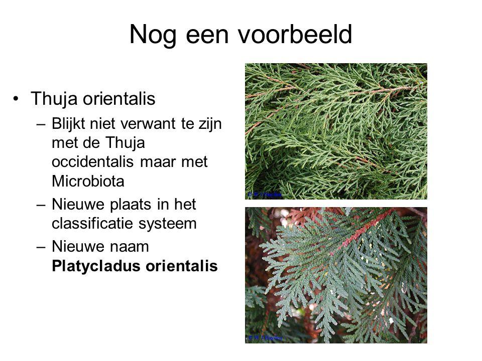 Nog een voorbeeld Thuja orientalis –Blijkt niet verwant te zijn met de Thuja occidentalis maar met Microbiota –Nieuwe plaats in het classificatie systeem –Nieuwe naam Platycladus orientalis