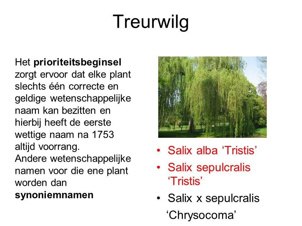 Het prioriteitsbeginsel zorgt ervoor dat elke plant slechts één correcte en geldige wetenschappelijke naam kan bezitten en hierbij heeft de eerste wettige naam na 1753 altijd voorrang.