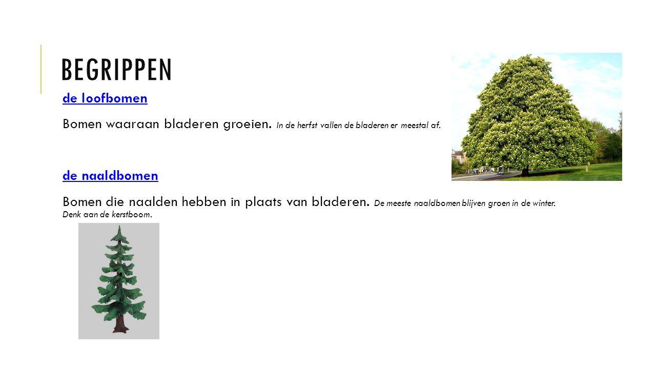 BEGRIPPEN de loofbomen Bomen waaraan bladeren groeien.
